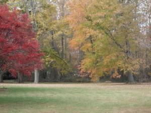 rouge, jaune, orange, feuilles, arbres