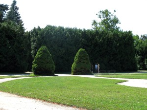 shaped, trees