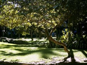 庭園、美術館、リパブリカ、リオデジャネイロ