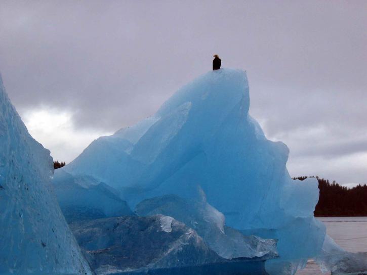 eagle, sits, glacier