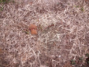 brown, dead, grass, weeds, leaves