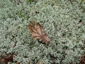 brown, leaf, sphagnum, moss