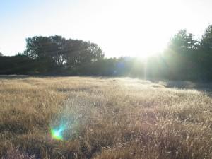 camp, sol, élevé, herbe