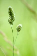 up-close, grün, Gras