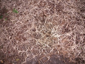 mortes, l'herbe, les mauvaises herbes
