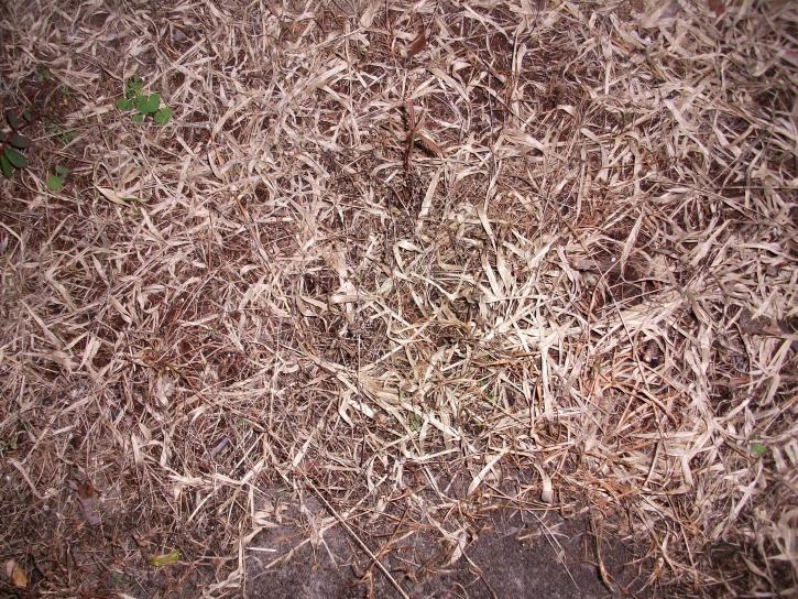 dead, grass, weeds