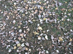 fallen, leaves, grass
