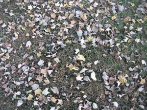 fallen, leaves, grass
