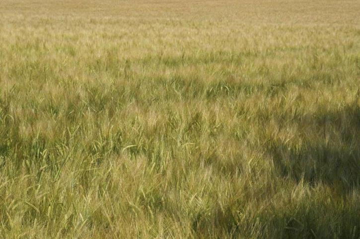 field, wild, grass, high, grass