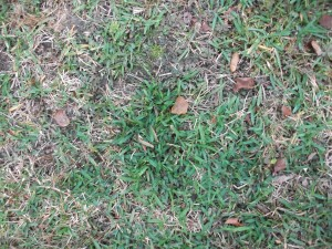 hierba, hojas caídas,