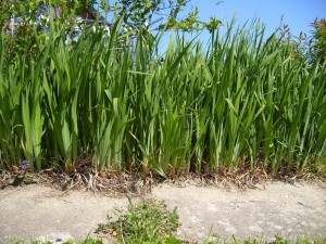 grass, front