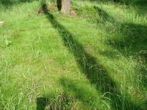 Gras, Frühling, Natur, Gras