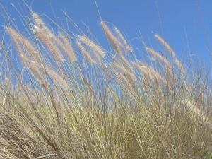 grass, wind