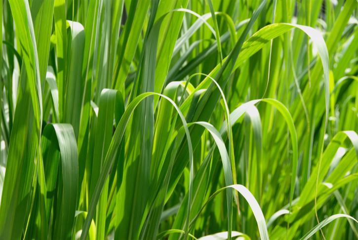 grass, macro, high resolution