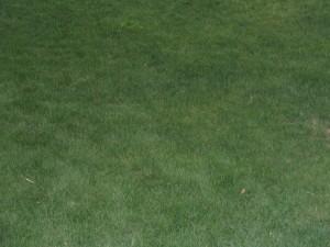 grass, moss
