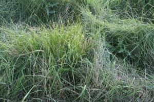 grass, texture