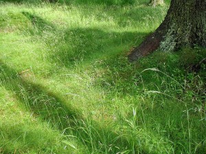 herbe, grand, arbre