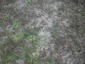 草、雑草、砂