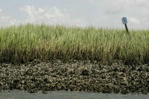 herbe verte, des marais, des huîtres, des lits