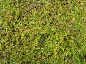 verde, suolo