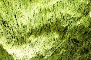 green, moss, macro