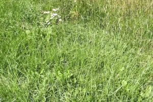 green, various, wild, grass