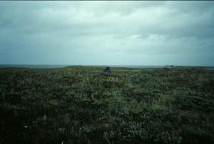 alto, erba verde, campi