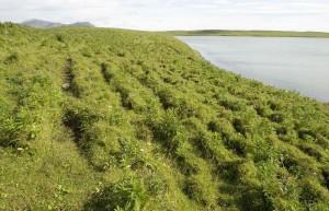 high, green grass, ground, coast