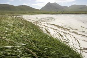 high, stalks, green grass, wind