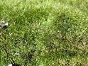mousse, les détails, l'herbe, l'image