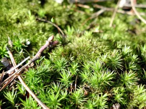 moss, green