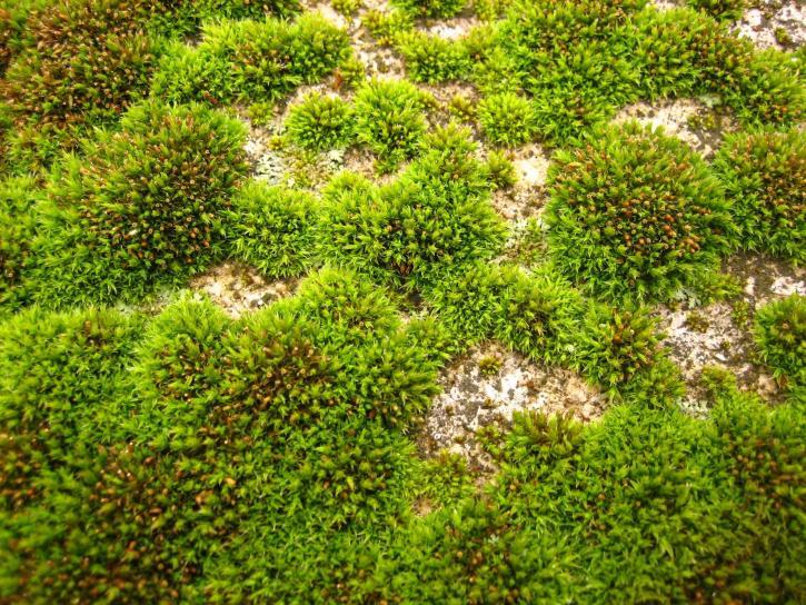 moss, green, field