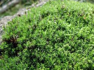 moss, high resolution