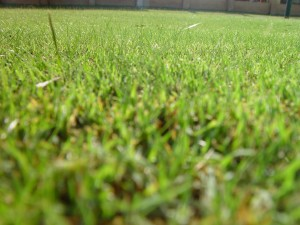 mown, lawn, insects, eye, view
