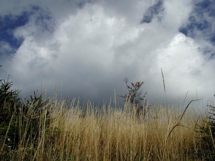 pasture, high, grass