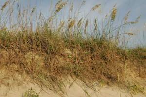 plants, grass, erosion