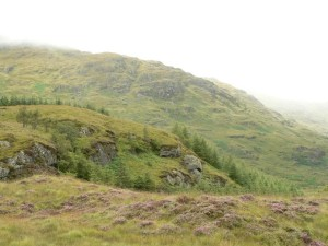 écossais, campagne, jaune, vert, herbe