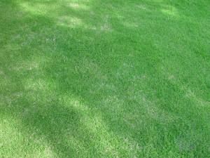 ombragé, pelouse