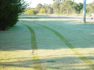 trye, prints, dewey, grass