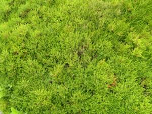 variety, short grass