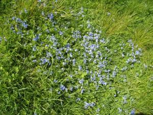 variety, short grass, field