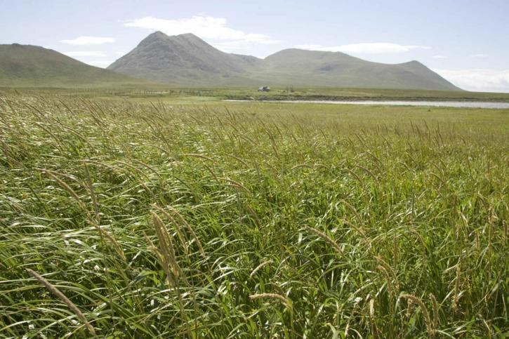 wild, green grass, coast
