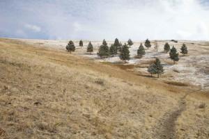 scénique, sentier, arbres, neige, épousseté, paysage