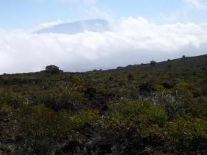 Hualalai, Mauna, paysage, montagne