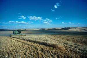 barley, harvest, washingtons, palouse, hills