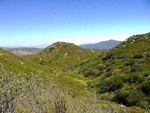 ngọn đồi xanh,