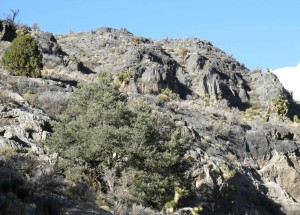 hillside, desert