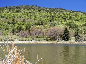 lakes, hills, trees, cattails, reeds