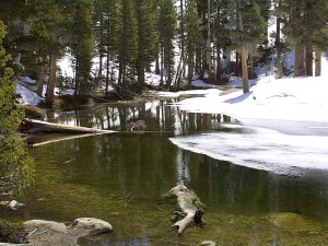 lakes, snow, trees, forest