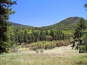 arbres, collines, ciel bleu, paysage, image